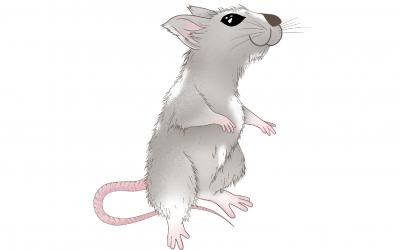 Astrología China: Características del signo Rata