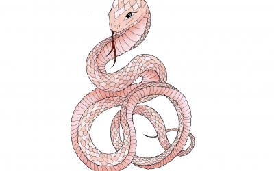 Astrología China: Características del signo Serpiente