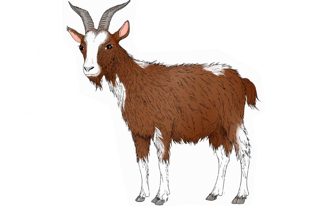 Astrología China: Características del signo Cabra