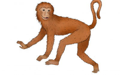 Astrología China: Características del signo Mono